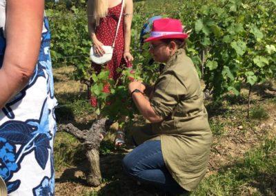 Domaine bodineau anne sophie dasn les vignes