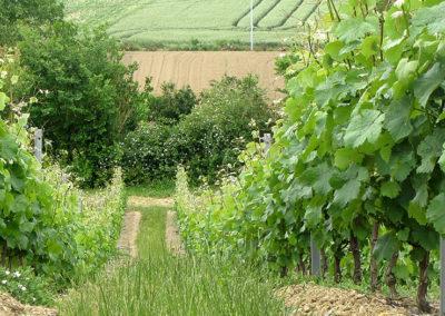 vin-coteau-du-layon